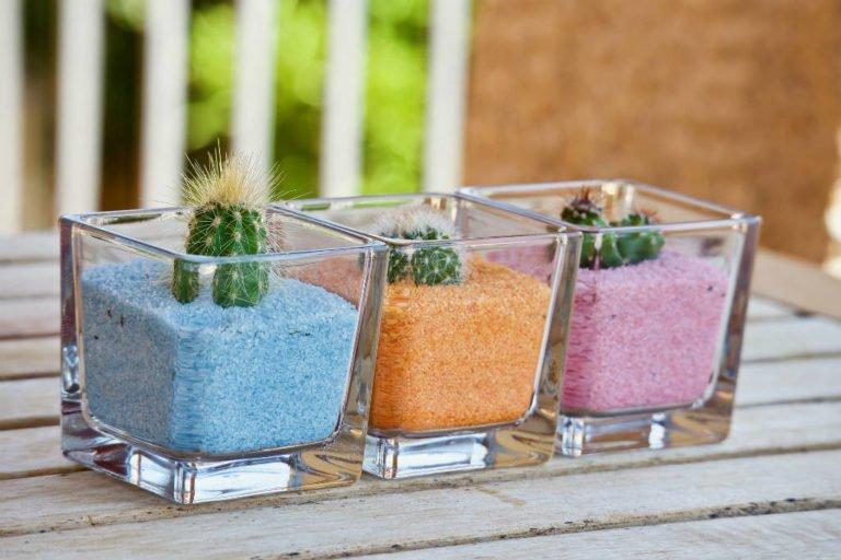 mal kaktus på sten med børn